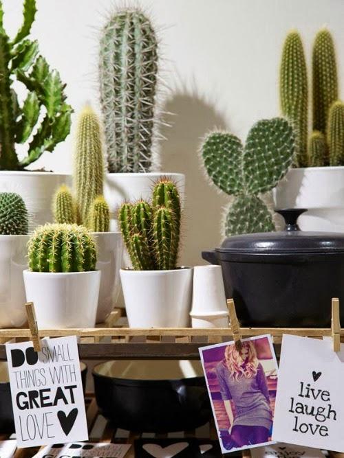 cactus-deco-decor-decoration-inspiration-home-casa-diyearte-diy