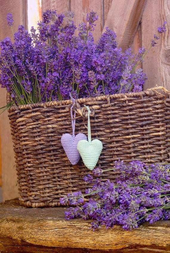 Cesto de flores de lavanda