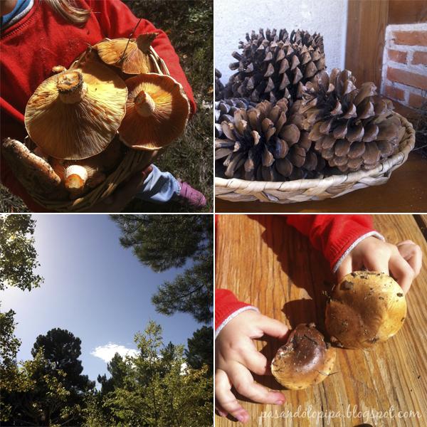 pasandolopipa   planes otoñales: recoger piñas, setas, hojas caidas...