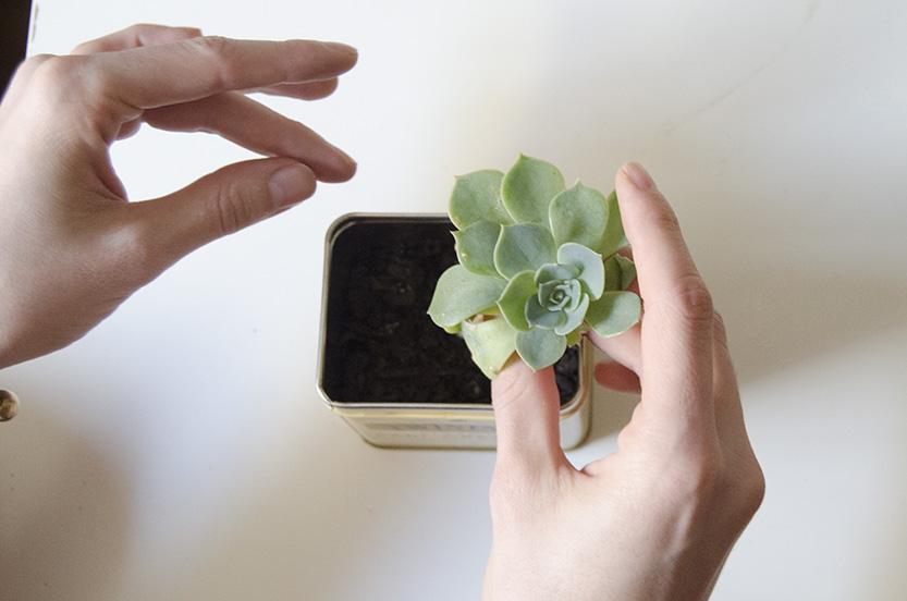 diy-lata-de-te-cactus-fabrica-de-imaginacion-paso-04