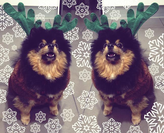 DIY Navidad: Disfraz de reno para tu perro - Handbox Craft Lovers ...