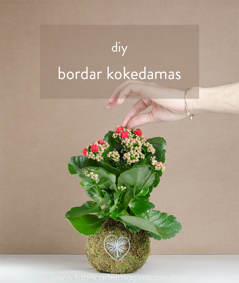 diy kokedama kit