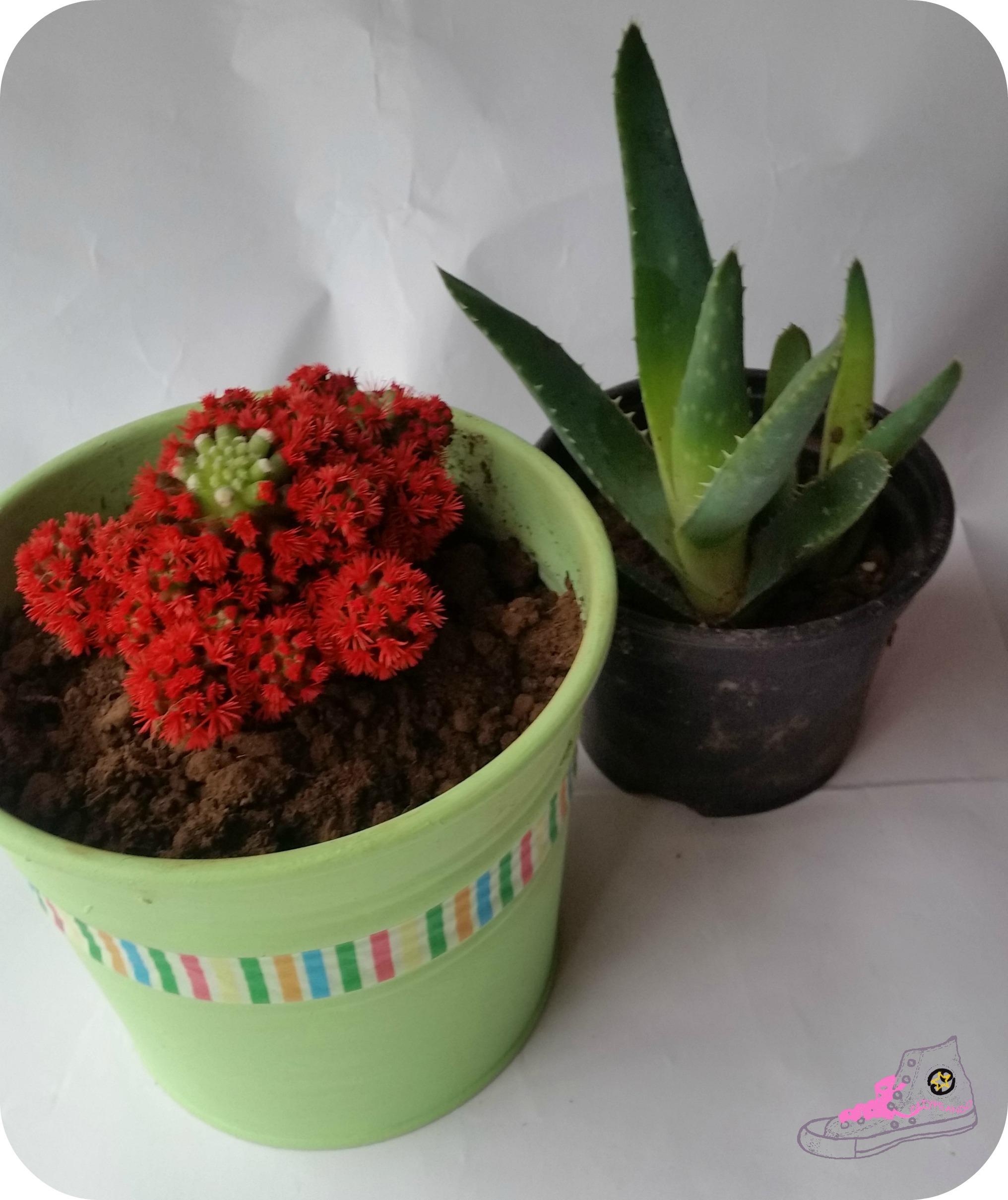 tiesto decorado para cactus