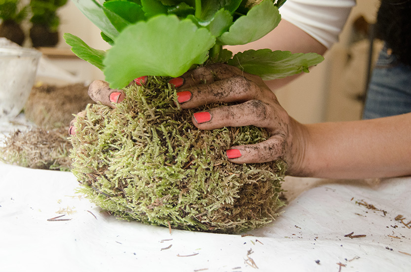 kit kokedama diy