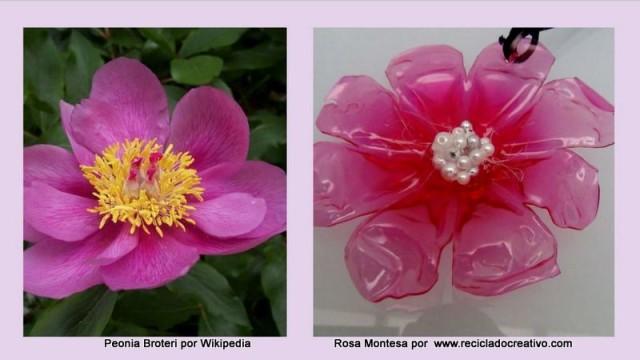 cropped-peonia-broteri-y-rosa-montesa-0021.jpg
