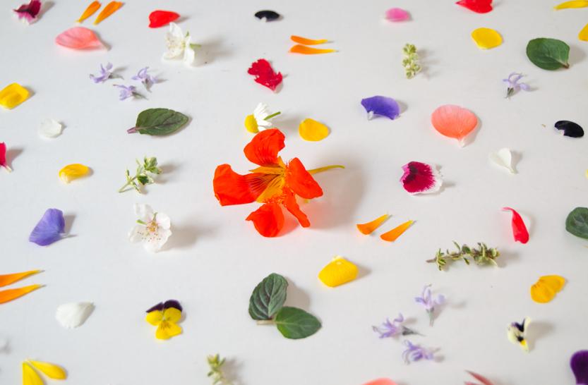flores-pattern-flor-grande