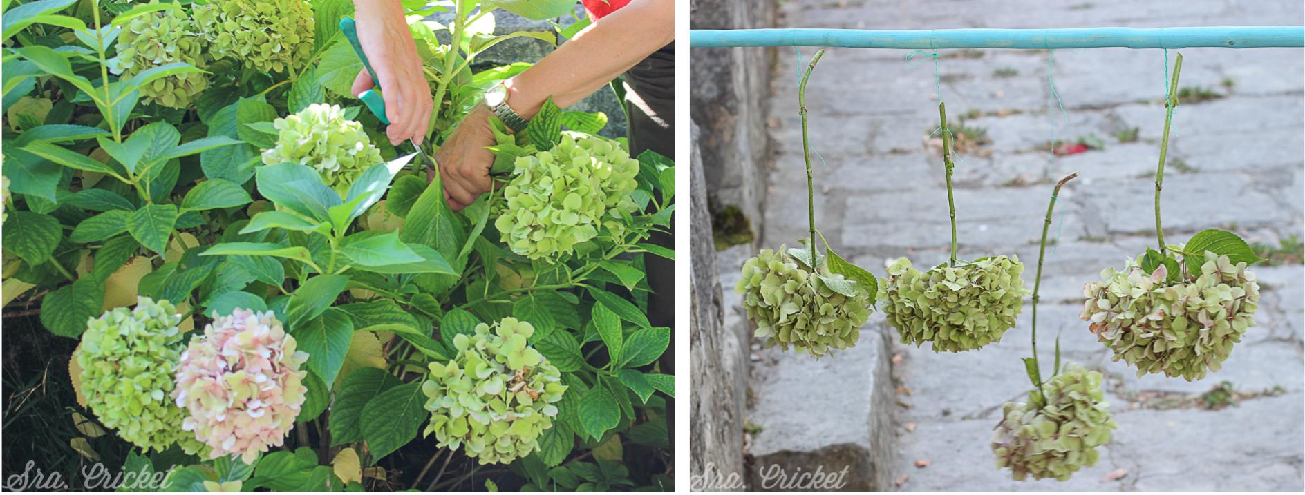 cortar y secar flores