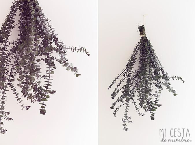 eucalipto pared DIY_1