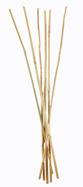 Tutor bambú natural