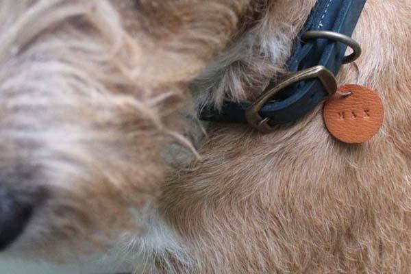 porta-nombre-collar-perro-diy