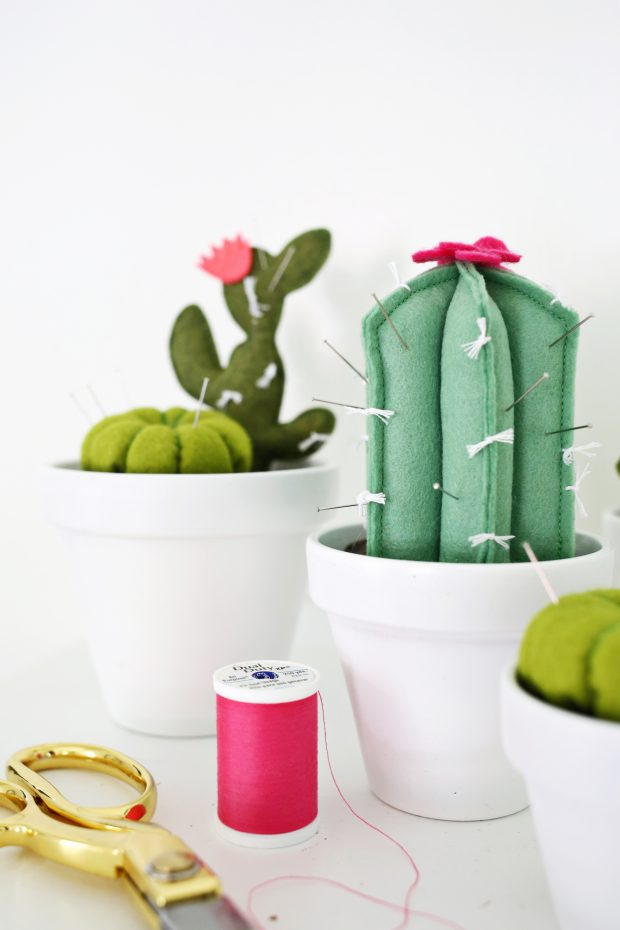 Cactus para tus agujas