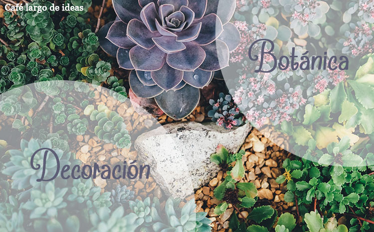 Decoración botánica y plantas singulares