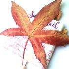 https://www.patypeando.com/2016/12/empaquetado-bonito-con-hojas-secas.html