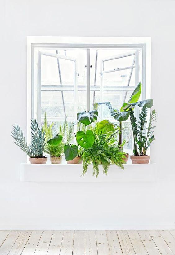 color de moda decoracion 2017 pantone - plantas para usar el greenery