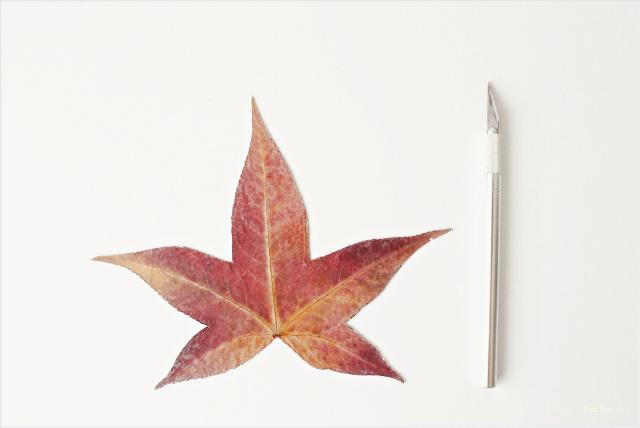 posavasos-diy-hechos-hojas-secas-prensadas-pintadas-paso-2