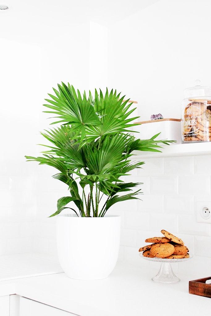 blanco_en_la_reforma_de_una_cocina_interiorismo_plantas