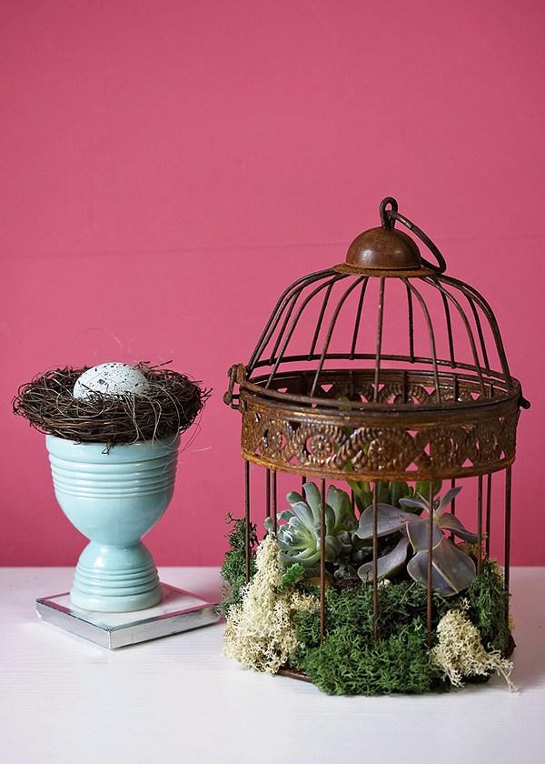 Plantas crasas expuestas en un jaula