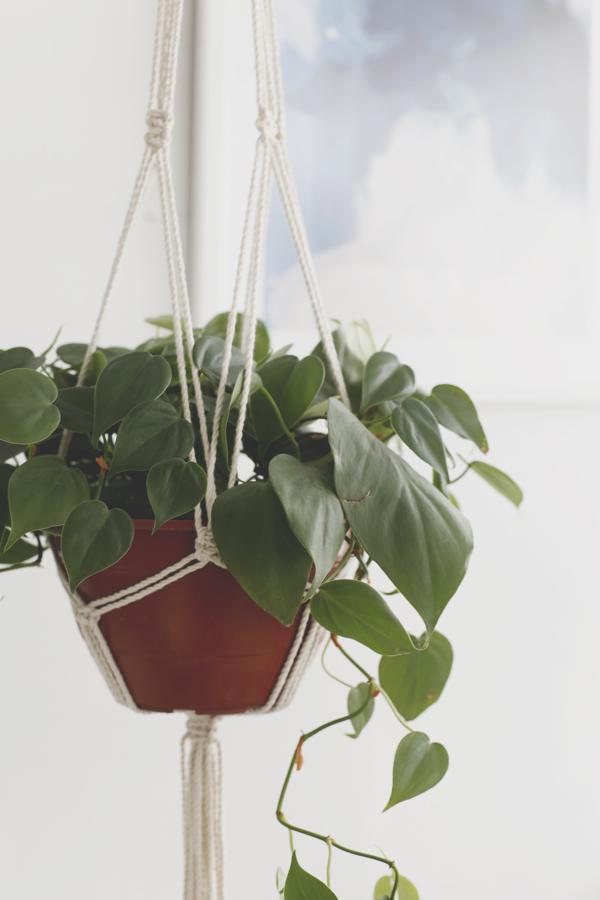 colgante-macrame-planta-plant-hanger-diy-proyecto