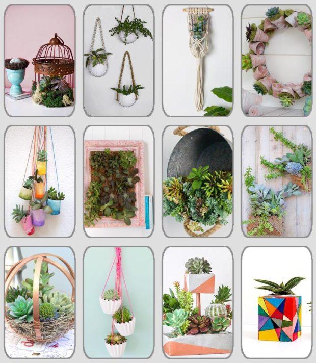 grupo de 12 centros DIY con plantas crasas