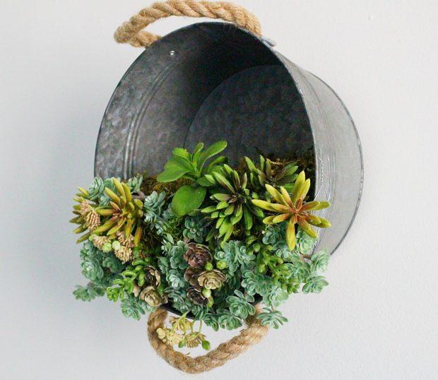 Barreño de cinz con plantas crasas