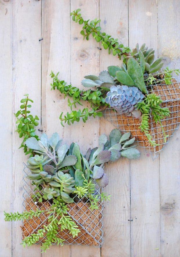 Sobres de alambrada con plantas crasas