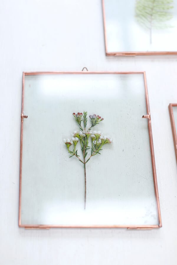 cuadro-hojas-flores-azahar-vidrio-decoracion-wall-plants-2