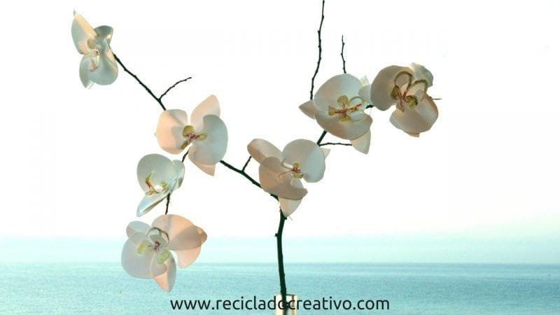 orquídeas reciclando botellas de plástico