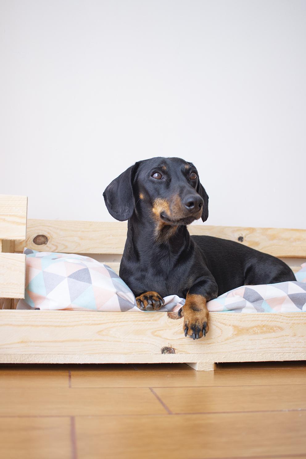 diy cama perro con caja de madera